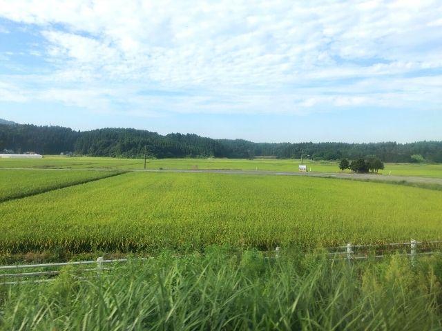 男鹿線の車窓から見える田園風景