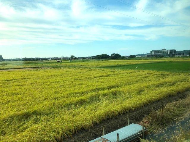 特急いなほグリーン車の車窓から見える新潟の田園風景