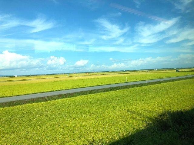 特急つがるの車窓から見える田園風景