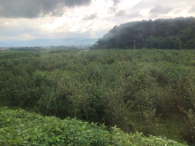 向瀬上駅付近にあるリンゴ畑